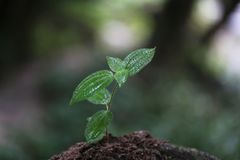 Στο χώμα στη περίοδο βροχών, φυσική ομορφιά στοκ φωτογραφίες