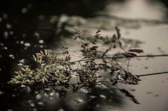 Στο ύδωρ Στοκ Εικόνες