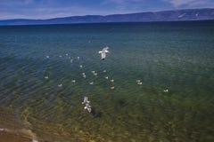 στο Baikal λιμνών καλοκαίρι στοκ εικόνα