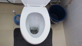 Στραγγίξτε το νερό από σε μια άσπρη τουαλέτα απόθεμα βίντεο