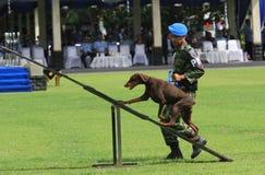 Στρατιωτική κατάρτιση σκυλιών Στοκ φωτογραφίες με δικαίωμα ελεύθερης χρήσης