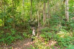 στρατιώτης ή chasseur που περπατά μέσω ενός δάσους με την πολύβλαστη χλόη Στοκ Εικόνες