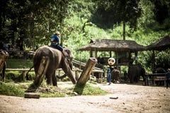 Στρατόπεδο ελεφάντων Maesa Στοκ Φωτογραφία