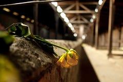 Στρατόπεδο συγκέντρωσης Auschwitz Birkenau Στοκ φωτογραφία με δικαίωμα ελεύθερης χρήσης