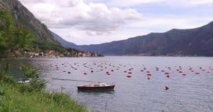 Στρείδι που καλλιεργεί στο Μαυροβούνιο