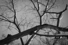 Στριμμένη σκιαγραφία δέντρων κάτω από τον γκρίζο ουρανό Στοκ φωτογραφίες με δικαίωμα ελεύθερης χρήσης