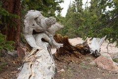 Στριμμένος σχηματισμός δέντρων στοκ εικόνες