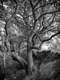 Στριμμένο δέντρο πάλι ο τοίχος Στοκ Εικόνα