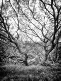 Στριμμένο δέντρο πάλι ο τοίχος Στοκ Φωτογραφία