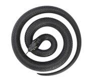 Στριμμένο μαύρο φίδι διανυσματική απεικόνιση