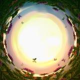 στροβιλισμένο περίληψη υπόβαθρο των μαγικών λουλουδιών και των πεταλούδων παραμυθιού στο φως ηλιοβασιλέματος Στοκ Εικόνα