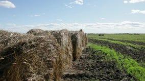 Στρογγυλά δέματα σανού στον πράσινο τομέα στη Ρωσία φιλμ μικρού μήκους