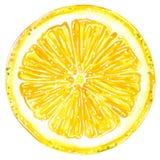 Στρογγυλή απεικόνιση watercolor φετών λεμονιών ελεύθερη απεικόνιση δικαιώματος