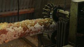 Στρογγυλή ταξινομώντας επεξεργασία προετοιμασιών κούτσουρων ξυλείας στο πριονιστήριο απόθεμα βίντεο