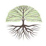 Στρογγυλό δέντρο με τις ρίζες ελεύθερη απεικόνιση δικαιώματος