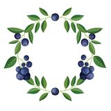 Στρογγυλό πλαίσιο με τα εύγευστα φρούτα βακκινίων επίσης corel σύρετε το διάνυσμα απεικόνισης απεικόνιση αποθεμάτων