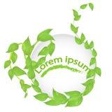 Στρογγυλό πλαίσιο των κλάδων με τα φρέσκα πράσινα φύλλα Στοκ εικόνες με δικαίωμα ελεύθερης χρήσης