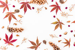 Στρογγυλό πλαίσιο των φύλλων πτώσης φθινοπώρου, των ξηρών λουλουδιών και των κώνων στο άσπρο υπόβαθρο Επίπεδος βάλτε, τοπ άποψη η Στοκ Εικόνες