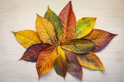 Στρογγυλό πλαίσιο φιαγμένο από κιτρινοπράσινα φύλλα, κλάδοι στο άσπρο υπόβαθρο Επίπεδος βάλτε, τοπ άποψη ζωή φθινοπώρου ακόμα στοκ εικόνες