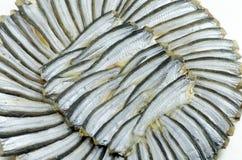 Στρογγυλά αποξηραμένα ψάρια Στοκ Εικόνα