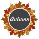 Στρογγυλή ετικέτα με τα φύλλα σφενδάμου φθινοπώρου πραγματικό λευκό φύλλων φθινοπώρου όμορφο απομονωμένο πλαίσιο Στοκ Εικόνες