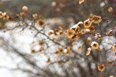 Στρογγυλοί σπόροι σε έναν κλάδο, θολωμένο υπόβαθρο Στοκ Φωτογραφίες