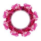 Στρογγυλό άσπρο έμβλημα πέρα από το ζωηρόχρωμο ροδαλό λουλούδι Στοκ εικόνα με δικαίωμα ελεύθερης χρήσης