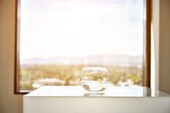 Στρογγυλό βάζο με το όμορφο λουλούδι, εσωτερικό ντεκόρ Στοκ Φωτογραφίες
