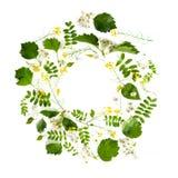Στρογγυλό πλαίσιο των λουλουδιών και των εγκαταστάσεων λιβαδιών σε ένα ελαφρύ υπόβαθρο Στοκ φωτογραφίες με δικαίωμα ελεύθερης χρήσης