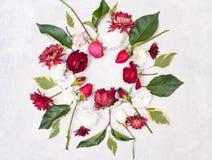 Στρογγυλό πλαίσιο των λουλουδιών Στοκ Εικόνα