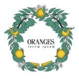 Στρογγυλό στεφάνι των φύλλων και των πορτοκαλιών φρούτων Διανυσματικό συρμένο χέρι ύφος σκίτσων πλαισίων καθορισμένος τρύγος απει Στοκ φωτογραφία με δικαίωμα ελεύθερης χρήσης