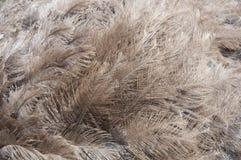 στρουθοκάμηλος s φτερών Στοκ φωτογραφία με δικαίωμα ελεύθερης χρήσης