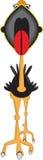 Στρουθοκάμηλος στοκ φωτογραφίες με δικαίωμα ελεύθερης χρήσης