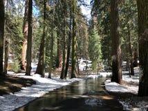 Στρωμένη πορεία μέσω ενός χιονώδους Sequoia εθνικού πάρκου Στοκ Εικόνες