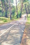 Στρωμένη πορεία ποδηλάτων με ένα άσπρο λωρίδα στο δάσος πεύκων στοκ εικόνες με δικαίωμα ελεύθερης χρήσης