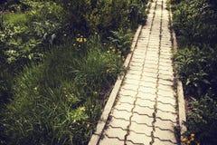 Στρωμένη τούβλο πορεία στα ονειροπόλα ξύλα φαντασίας Στοκ φωτογραφίες με δικαίωμα ελεύθερης χρήσης