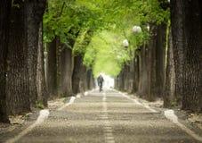 Στρωμένος Mistic δρόμος με τη διπλή γραμμή δέντρου Στοκ Εικόνα