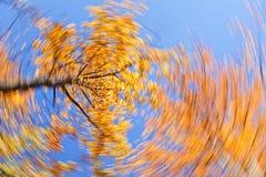 στρόβιλος φύλλων φθινοπώ&rho Στοκ εικόνα με δικαίωμα ελεύθερης χρήσης