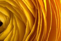 στρώματα κίτρινα Στοκ Εικόνες