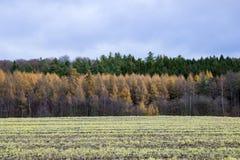 Στρώματα των δέντρων Στοκ φωτογραφίες με δικαίωμα ελεύθερης χρήσης