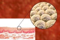 Στρώμα των κυττάρων, του ελαφριών μικρογραφήματος και της απεικόνισης ελεύθερη απεικόνιση δικαιώματος
