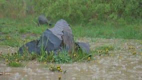 Στυλοβάτες βασαλτών στη βροχή φιλμ μικρού μήκους