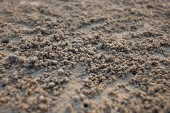 στόμα Κάτω Χώρες ερημιτών εστίασης καβουριών Στοκ Εικόνες