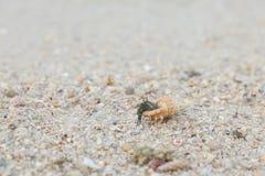 στόμα Κάτω Χώρες ερημιτών εστίασης καβουριών Στοκ Φωτογραφία
