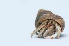 στόμα Κάτω Χώρες ερημιτών εστίασης καβουριών Στοκ Εικόνα