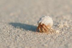 στόμα Κάτω Χώρες ερημιτών εστίασης καβουριών Στοκ φωτογραφία με δικαίωμα ελεύθερης χρήσης