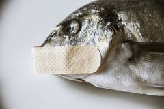 Στόμα ψαριών κλεισμένο στοκ εικόνες με δικαίωμα ελεύθερης χρήσης
