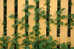 στύλος φραγών κίτρινος Στοκ φωτογραφία με δικαίωμα ελεύθερης χρήσης