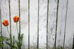 στύλος φραγών Στοκ φωτογραφία με δικαίωμα ελεύθερης χρήσης