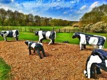 Συγκεκριμένες αγελάδες Bancroft milton Keynes Στοκ Φωτογραφίες